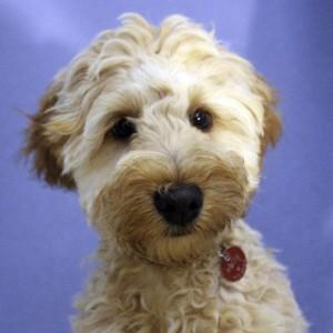 dog-house-grooming